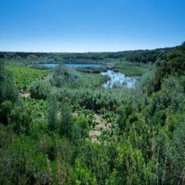 Riserva naturale integrale Lago Preola e Gorghi Tondi